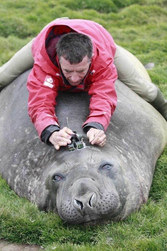 Christophe Guinet & les éléphants de mer
